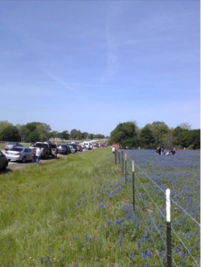 Bluebonnet traffic